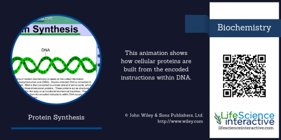Protein_Synthesis_Animation