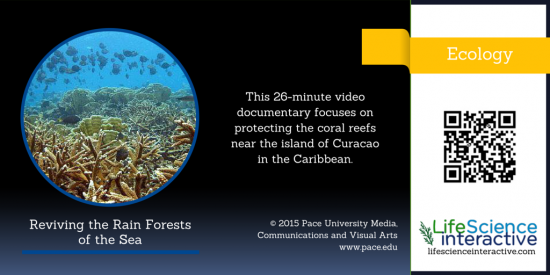 Ecology_Reviving_the_Rain_Forests_of_the_Sea