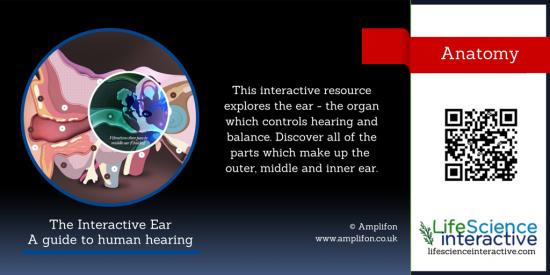 Interactive_Ear