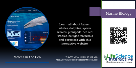 Marine_Biology_Whales