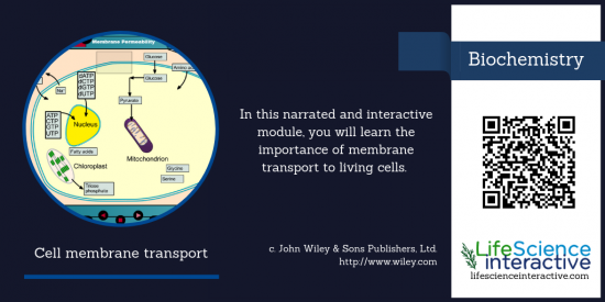 Cell_membrane_transport