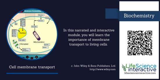 Cell_membrane_transport
