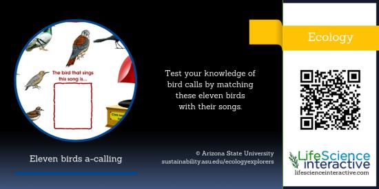 Bird_calls
