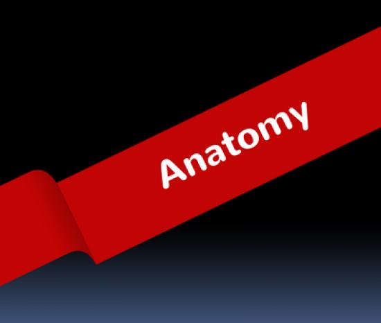 Anatomy_400x339